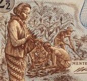 De Indonesische Arbeiders van het Gebied Stock Afbeelding