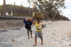 De Indonesische vrouw draagt hoofdmand met zeewier Stock Afbeelding