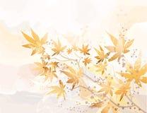 De indruk van de herfst Stock Fotografie