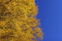 De indruk van de herfst Stock Foto's