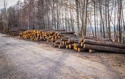 De industriële geplande ontbossing in de lente verse groene els ligt op de grond langs de weg royalty-vrije stock afbeelding