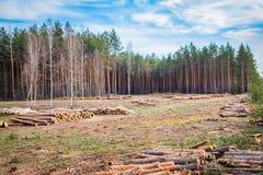 De industriële geplande ontbossing in de lente, verse groene pijnboom ligt op de grond amid stompen royalty-vrije stock fotografie