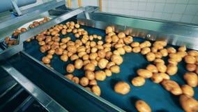 De industriële vervoerder verplaatst natte aardappels stock footage