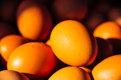 De industrie van de eierenproductie Stock Fotografie