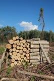 De industrie van het timmerhout Royalty-vrije Stock Foto's