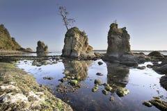 De Inham van het varken en van Zeugen in Garibaldi Oregon at Low Tide stock foto's