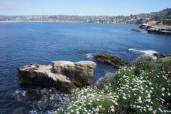 De Inham van La Jolla - zeeleeuwen op rots Royalty-vrije Stock Foto