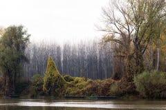 De inne vid kusten träden Royaltyfria Foton