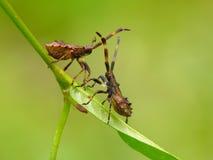 De insecten van het dok stock foto's