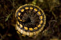 De insecten voegen aan de grootmoedige biodiversiteit van de Monteverde-Wolk toe royalty-vrije stock foto's