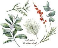 De installatie en de bessen van waterverfkerstmis De hand schilderde rozemarijn, eucalyptus, ceder, snowberry en geïsoleerde spar vector illustratie
