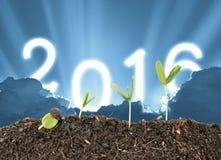De installatie groeit op hemel 2016 achtergrond, de vooravond van het nieuwe jaar, toekomstige ster Royalty-vrije Stock Afbeeldingen