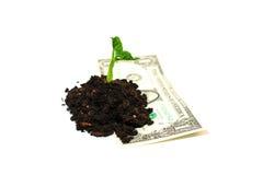 De installatie groeit van een stapel van grond en bankbiljet op een witte rug Stock Foto