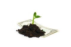 De installatie groeit van een stapel van grond en bankbiljet op een witte rug Royalty-vrije Stock Foto