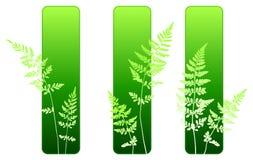 De installatie groene milieubanners van de varen Stock Fotografie