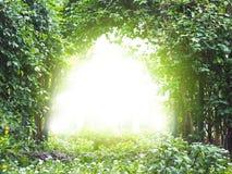 De installatie van de boogklimplant met zonlicht stock afbeelding