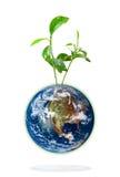 De installatie van de baby het groeien van de aarde Stock Foto