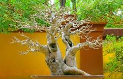 De installatie van de bonsaicascade Royalty-vrije Stock Fotografie
