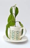 De installatie van de koffie in een kop Stock Afbeelding