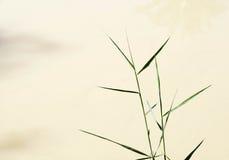 De installatie van de papyrus (papyrus Cyperus) Stock Fotografie