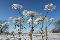 De installatie van de winter Royalty-vrije Stock Afbeeldingen