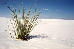 De installatie van de woestijn Stock Foto's