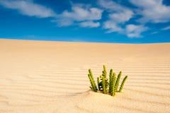 De installatie van de woestijn Stock Afbeeldingen