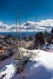 De Installatie van de yucca in de Winter stock afbeelding