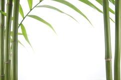 De installatie van het bamboe Royalty-vrije Stock Afbeelding