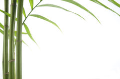 De installatie van het bamboe Royalty-vrije Stock Foto's