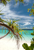De installatie van het strand royalty-vrije stock foto's