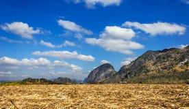 De installatie van het suikerriet met mountant een blauwe hemel Royalty-vrije Stock Foto's