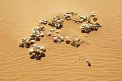 De Installatie van het zandduin op Strand Stock Afbeelding