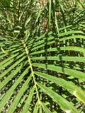 De Installatie van de palmaard voor de Zomer royalty-vrije stock afbeelding