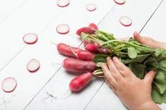 De installatie van de rode radijswortel Houten raad, landbouwachtergrond Jong geitje, kind, babyhand royalty-vrije stock afbeeldingen