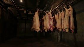 De installatie van de vleesverwerking Diepvriezer met karkassen van varkens stock footage