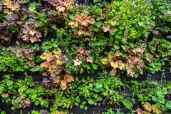 De installaties en de bloemen in potten voor verkoop in tuin centreren of planten kinderdagverblijf stock foto's