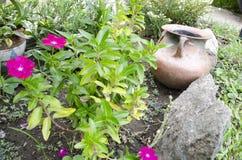 De installaties en de bloemen van tuinvazen in de tuin Royalty-vrije Stock Afbeeldingen