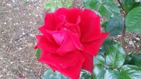 De installaties en de bloemen het rood van de tuinzon van Spanje Stock Foto's