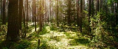 De installaties en de bomen van Forest Wild stock afbeeldingen