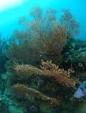 De installaties van de spons in koraalrif Royalty-vrije Stock Fotografie
