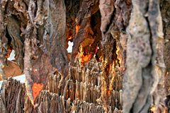 De installaties van de tabak het drogen Royalty-vrije Stock Afbeeldingen