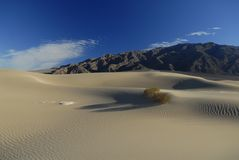 De installaties van de woestijn op zandduinen Royalty-vrije Stock Afbeeldingen