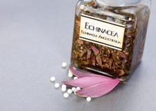 De installatieuittreksel van Officinalis van Echinacea Royalty-vrije Stock Fotografie
