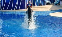 De instructeur door dolfijn bij Seaworld-Dolfijndagen die wordt verhoogd toont stock foto