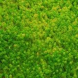 De integriteit van het bos Royalty-vrije Stock Fotografie