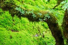 De integriteit van het bos Stock Foto
