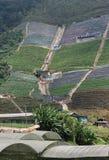 De intensieve Landbouw van de Berg stock afbeelding