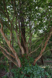 De interessante boom die opent Royalty-vrije Stock Afbeelding
