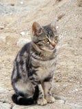 De interessante en mooie beelden van de straatkat geschikt om te adverteren en ontwerpen Stock Fotografie